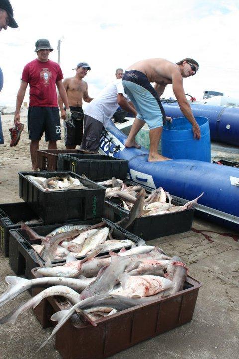 Hernán Soto: Guía de Pesca