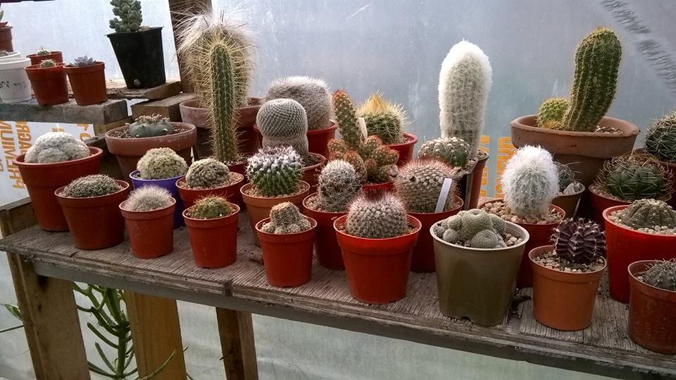 Almaverde Cactus Suculentas