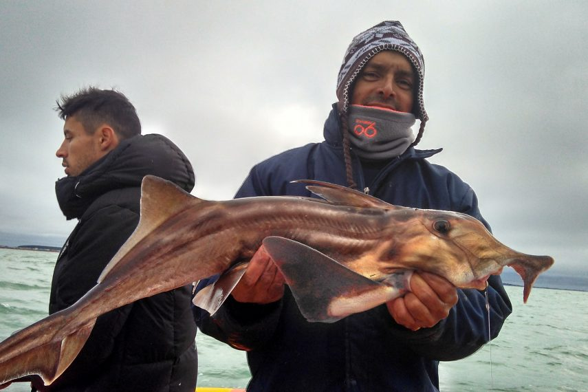 Lobo de Mar – Pesca embarcado