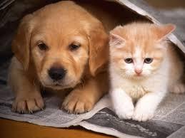 Gato y Mancha Veterinaria