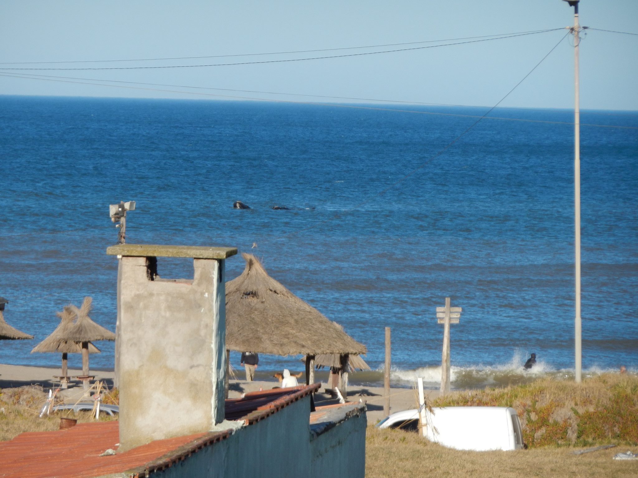 Ballenas en Santa Clara del Mar
