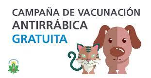 Vacunación Antirrábica 2019