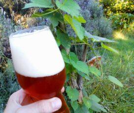 Creek Cerveza Artesanal